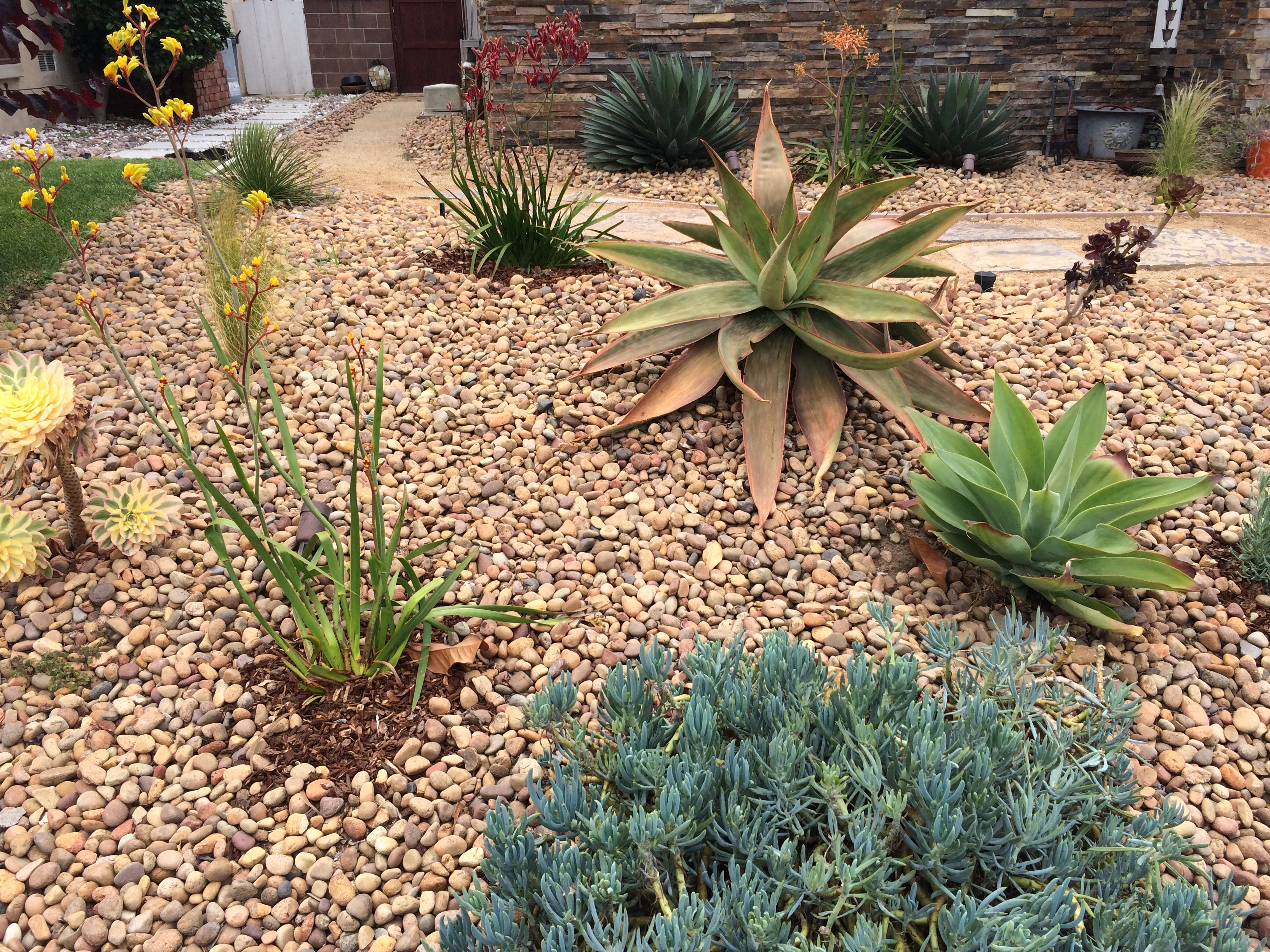 A Common Misconception Is That Drought Tolerant Or Xeriscape Means A Yard  With Brown Or Maybe Green Plants And Ordinary Succulents.